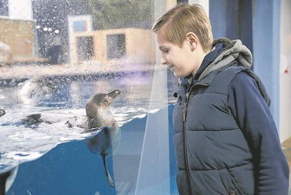 Win tickets to the new look Sea-Life Adventure, Southend