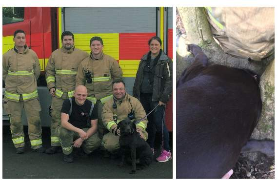 Dog rescued from One Tree Hill by Essex firefighters, after getting head stuck in tree roots this morning